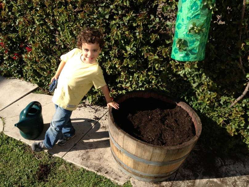 After filling the barrel to nearly the brim, it's time to plant!!!